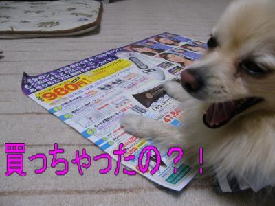 DSCF2743_convert_20100411025831.jpg