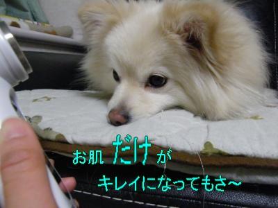DSCF2749_convert_20100411030033.jpg