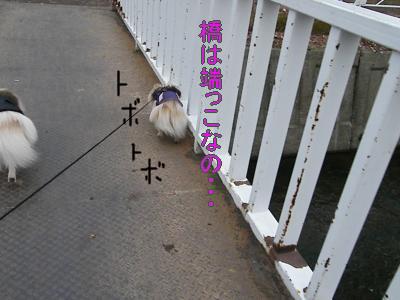 DSCF2783_convert_20100413024615.jpg