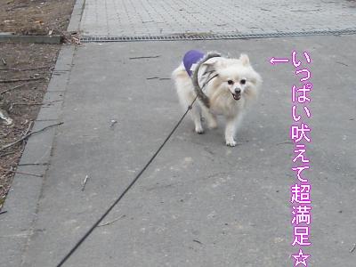 DSCF2791_convert_20100413024702.jpg