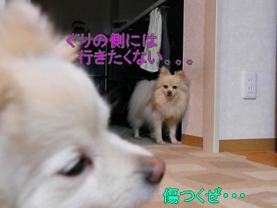 DSCF2909_convert_20100419023110.jpg
