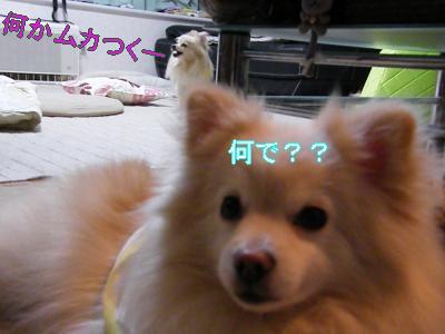 DSCF2913_convert_20100419023212.jpg