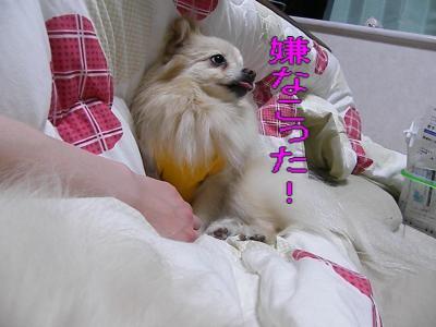 DSCF2933_convert_20100421032450.jpg