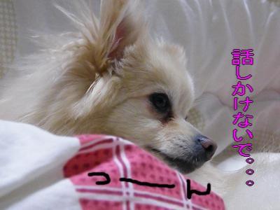 DSCF2948_convert_20100421032515.jpg