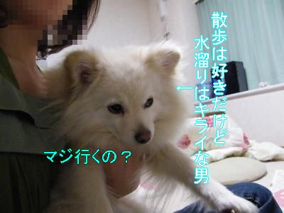 DSCF2964_convert_20100421032656.jpg