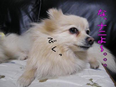 DSCF2973_convert_20100425054024.jpg