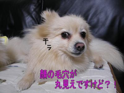 DSCF2975_convert_20100425054047.jpg