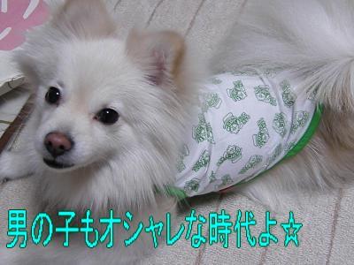 DSCF3024_convert_20100427024746.jpg