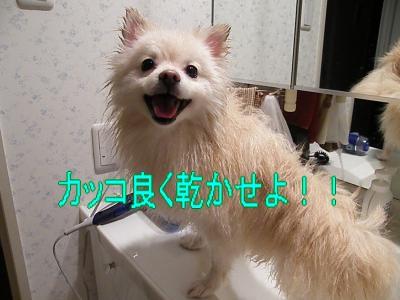 DSCF3064_convert_20100501034945.jpg