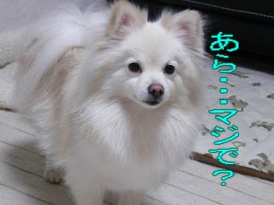 DSCF3073_convert_20100503031741.jpg