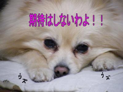 DSCF3086_convert_20100503031827.jpg