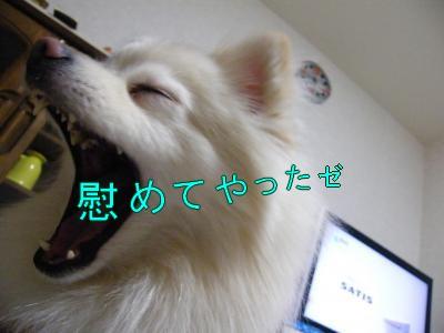 DSCF3108_convert_20100503031718.jpg