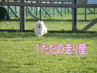 DSCF3157_convert_20100505013457.jpg