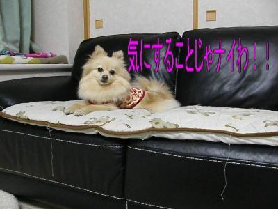 DSCF3229_convert_20100507022514.jpg