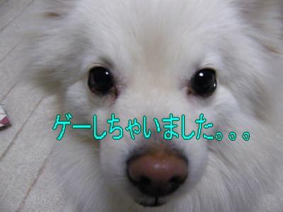 DSCF3252_convert_20100507022434.jpg