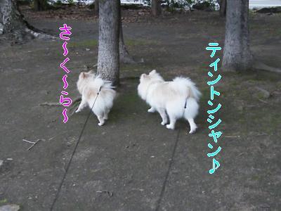 DSCF3273_convert_20100510021741.jpg