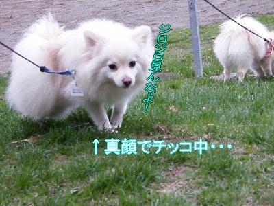 DSCF3276_convert_20100510021801.jpg