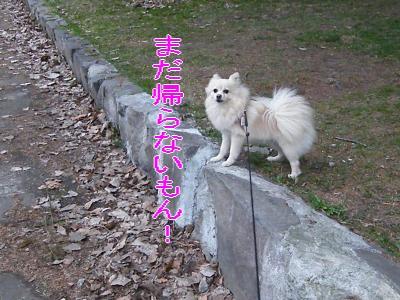 DSCF3290_convert_20100510021821.jpg