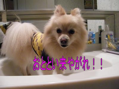 DSCF3366_convert_20100518024831.jpg