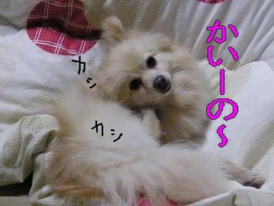 DSCF3418_convert_20100520022545.jpg