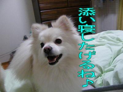 DSCF3433_convert_20100524010241.jpg