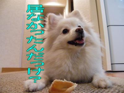 DSCF3451_convert_20100530045017.jpg