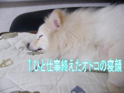 DSCF3454_convert_20100528025418.jpg