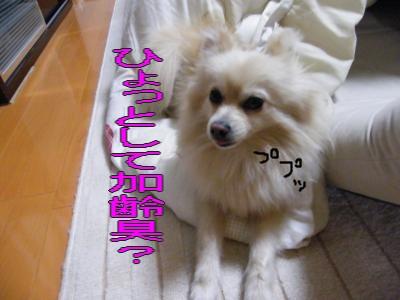 DSCF3455_convert_20100528025508.jpg