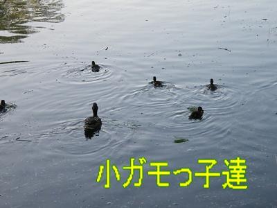 DSCF3489_convert_20100601023419.jpg