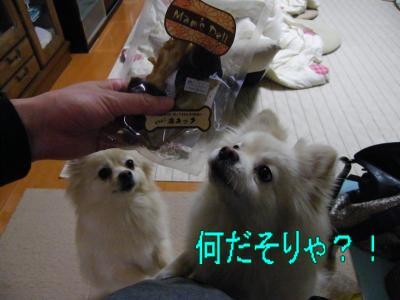 DSCF3538_convert_20100603022043.jpg