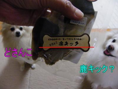 DSCF3541_convert_20100603022130.jpg