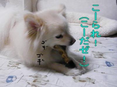 DSCF3551_convert_20100603022213.jpg