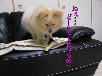 DSCF3557_convert_20100603022152.jpg