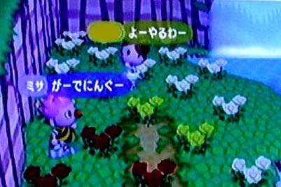 blog20121028f.jpg