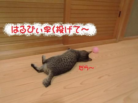 P1082259_convert.jpg