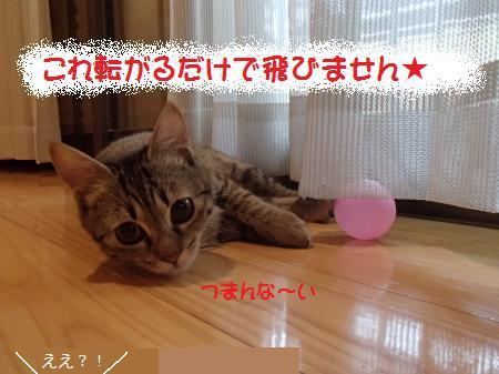 P1082263_convert_201401220255148f8.jpg