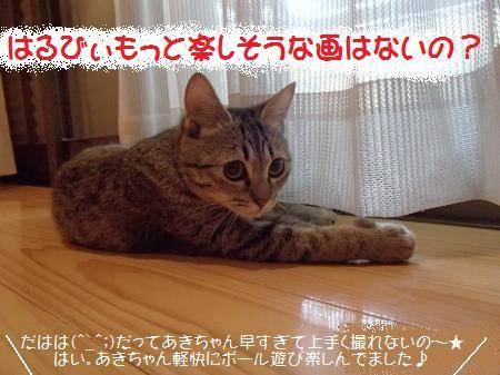 P1082264_conver.jpg
