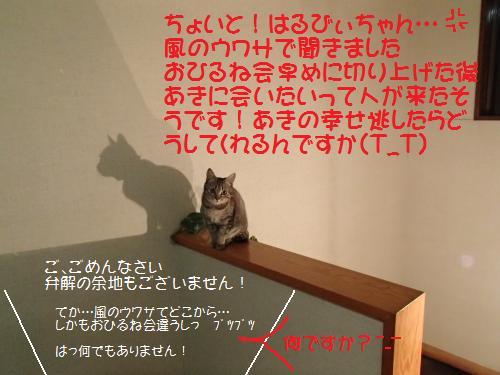 P1260240_.jpg