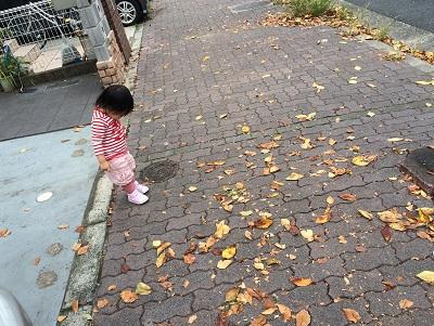 落ち葉が阻む。