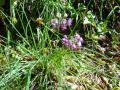 2011年10月31日 らっきょうの花