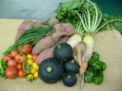 2011年11月10日今日の収穫 (2)