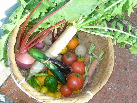 2011年11月21日今日の収穫