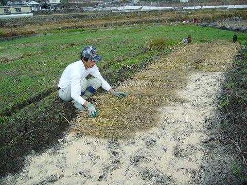 2012年12月15日苗床の準備 (12)