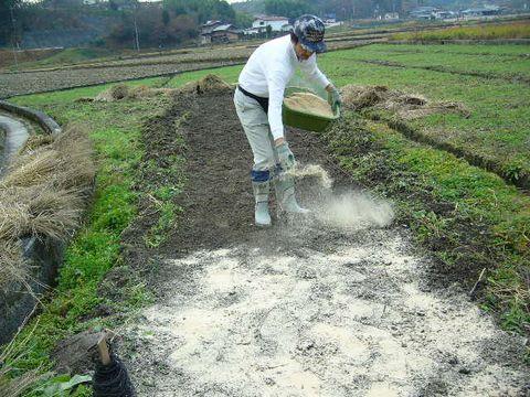 2012年12月15日苗床の準備 (5)