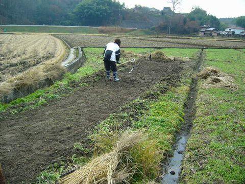 2012年12月15日苗床の準備 (3)
