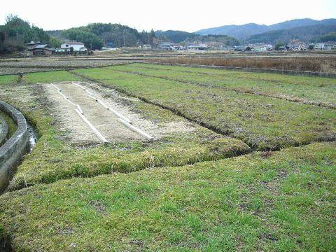 2012年2月26日宇津戸小麦 (2)