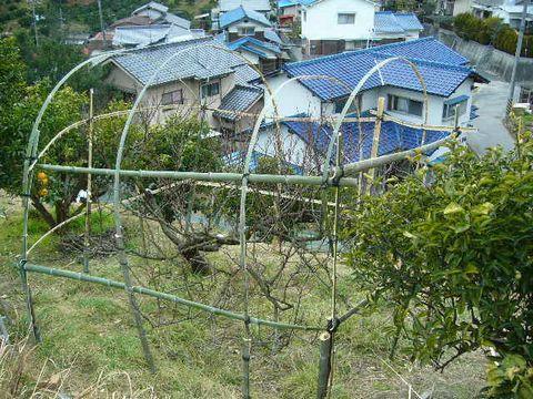 2012年2月28日桃の木の支柱 (3)