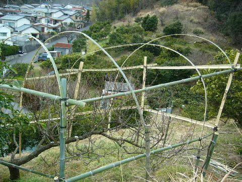 2012年2月28日桃の木の支柱 (1)