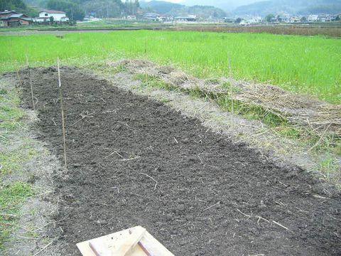 2012年4月25日籾おろし (5)