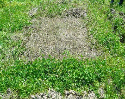 2012年5月19日大北農園 (1)